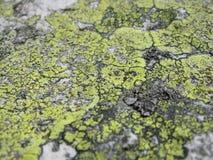 Vieux lichen sur la roche Images libres de droits