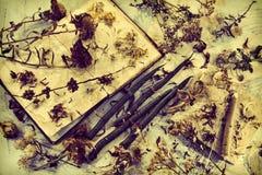Vieux livre de journal intime, bougies vertes, graines sèches et fleurs d'aster sur la table de cru photo libre de droits