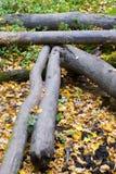 Vieux logarithmes naturels Photographie stock