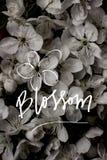 Vieux milieux de fleur de vintage - photos de style d'effet de vintage Photo libre de droits