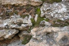 Vieux mur avec de la mousse Photo stock
