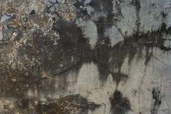 Vieux mur avec le moule Image stock