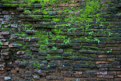 Vieux mur avec MOS Background Photos stock