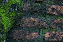 Vieux mur avec MOS Background Photo stock