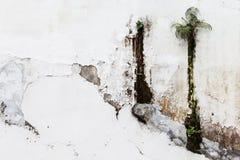 Vieux mur blanc avec la flore non désirée étonnante Photos libres de droits