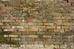 Vieux mur de briques avec de la mousse Image libre de droits