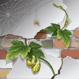 Vieux mur de briques avec la toile d'araignée Photos libres de droits