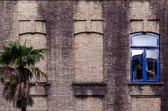 Vieux mur de briques avec trois fenêtres, deux faux, une avec le cadre en verre et bleu de couleur, petite paume près du bâtiment photo libre de droits