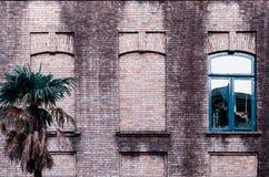 Vieux mur de briques avec trois fenêtres, deux faux, une avec le cadre en verre et bleu de couleur, petite paume près du bâtiment photo stock