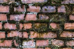 Vieux mur de briques envahi avec de la mousse verte image libre de droits