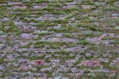 Vieux mur de briques superficiel par les agents avec l'élevage de mousse Images libres de droits
