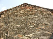 Vieux mur de grange avec la vigne Photo stock