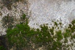 Vieux mur en béton ou vieux mur de marbre avec des taches et mousse avec le champignon Image libre de droits