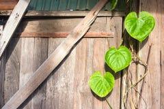 Vieux mur en bois avec la forme de coeur des feuilles Images libres de droits