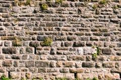 Vieux mur en pierre avec la végétation Image stock