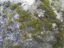 Vieux mur en pierre avec le moule vert à Paris Photo stock