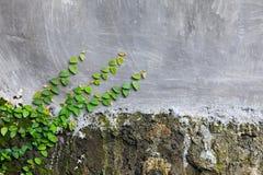Vieux mur en pierre avec les usines et la fente photographie stock libre de droits