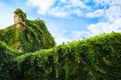 Vieux mur en pierre de château médiéval envahi avec le lierre luxuriant Bâtiment vert avec des usines Images libres de droits