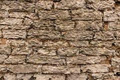 Vieux mur enrichi superficiel par les agents de chaux Photos libres de droits