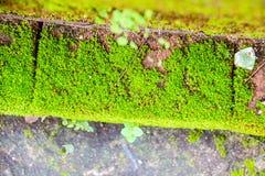 Vieux mur et fond vert de MOS Photos stock