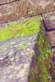 Vieux mur et fond vert de MOS Image stock