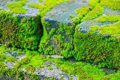 Vieux mur et fond vert de MOS Photographie stock