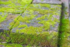 Vieux mur et fond vert de MOS Image libre de droits