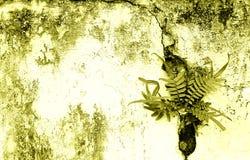 Vieux mur et fougères criqués image stock