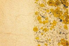 Vieux mur jaune avec le lichen photographie stock libre de droits