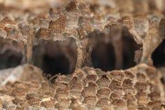 Vieux nid de guêpe Le nid d'une famille des guêpes qui est prise un Cl Image stock