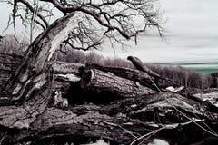 Vieux, noué bois de construction Image libre de droits