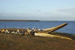 Vieux os de baleine sur une île plus morne Photo stock