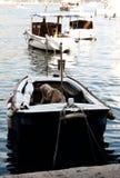 Vieux pêcheur dans un bateau, Dubrovnik Images libres de droits