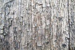 Vieux panneaux de chêne Images stock