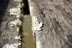 Vieux parasite en bois Photographie stock libre de droits