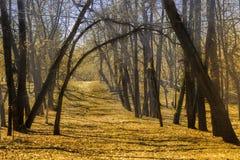 Vieux parc pendant l'automne tôt photographie stock