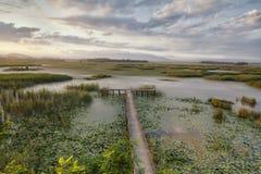 Vieux pilier de lac en nature Photos stock