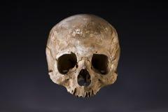 Vieux plan rapproché de crâne Photo libre de droits