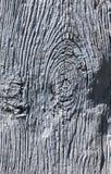 Vieux plan rapproché de Gray Wood image stock