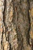 Vieux plan rapproché de texture d'écorce d'arbre Images libres de droits