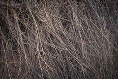 Vieux plan rapproché superficiel par les agents de macro de paille de texture de paume Photographie stock
