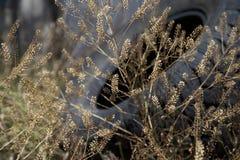 Vieux pneu abandonné dans la vie de pays Photos stock