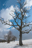 Vieux pommier dans la neige Image stock