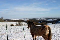 Vieux poney sage Photos libres de droits