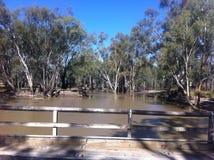 Vieux pont au-dessus de Murray River dans la forêt de Barmah Image libre de droits