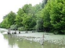 Vieux pont dans le marais Photographie stock libre de droits
