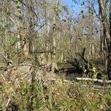 Vieux pont dans les bois Images stock