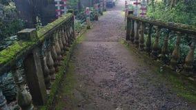 vieux pont dans une forêt photographie stock