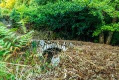 Vieux pont Genovese abandonné en Corse - 1 photographie stock libre de droits