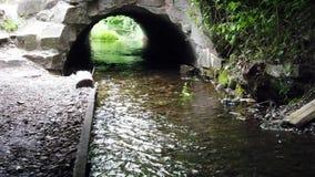 Vieux pont mystérieux avec la rivière clips vidéos